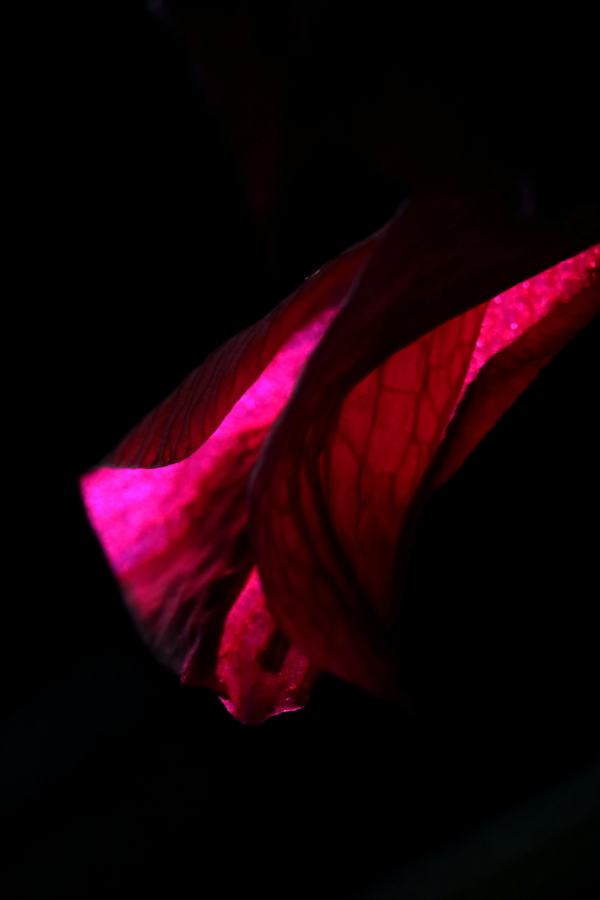 Challenging Abstract Photography